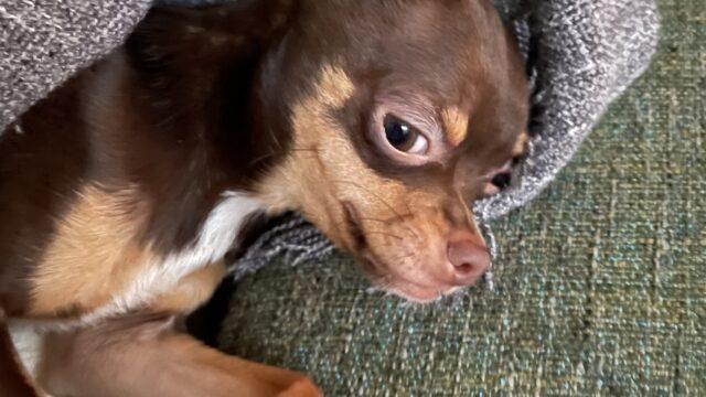 愛犬mallow